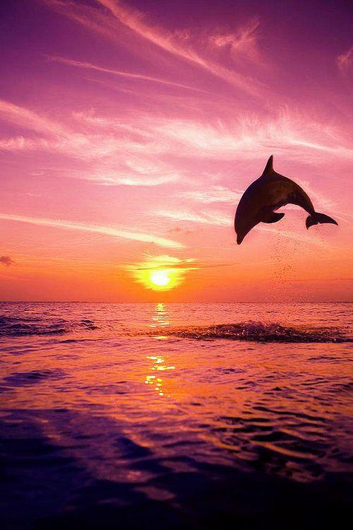 c17ee463edb269f9fcb1bf2b36919f2d--bottlenose-dolphin-puerto-vallarta