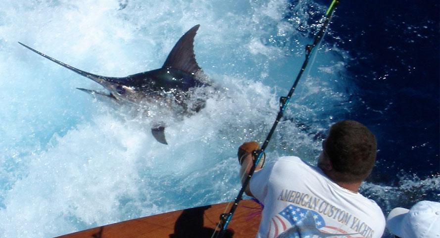 sport-fishing - Yacht Charters Puerto Vallarta